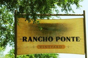 Rancho Ponte Vineyard